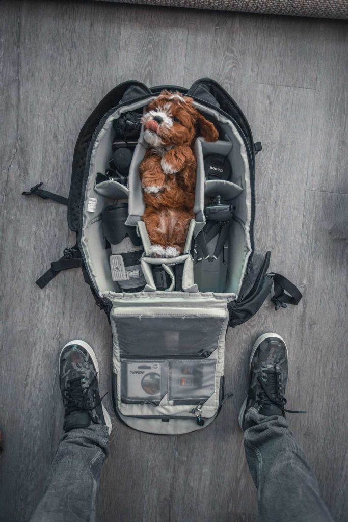 ¡Lleva tu mascota donde quieras!
