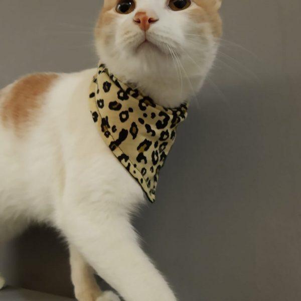 Bandana para gato