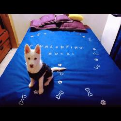 protector-cama-1-min